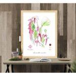 Affiche style planche botanique